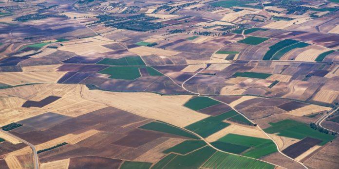 Rentable Agrarflächen: Eine Entwicklung, die in den kommenden Jahren weiter an Dynamik gewinnen wird.