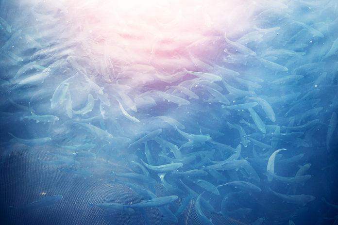 Singapore Aquaculture bekommt fast 6 Mio. EUR von Siemens